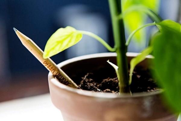 Bleistift Sprout